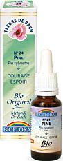 Pin Sylvestre - Pine N°24 20Ml Bio