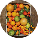 panier agrumes